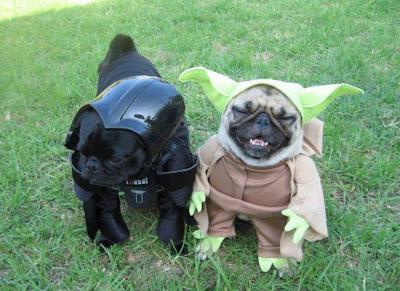 Pug Costume Photo