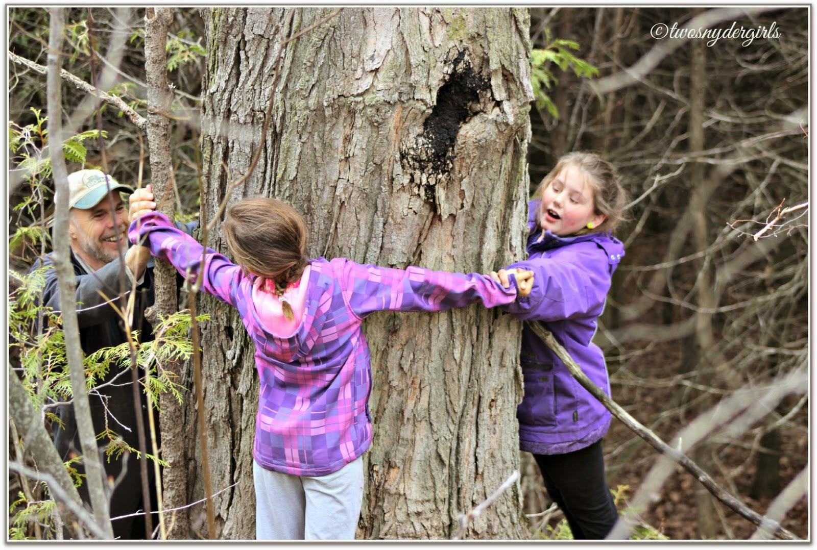 takes three to surround the tree