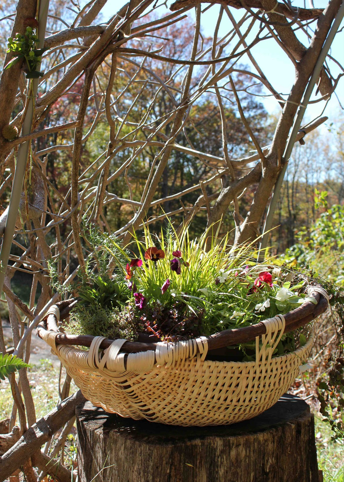 http://4.bp.blogspot.com/-JFaQ7QYXTFM/Tqhsxtprv6I/AAAAAAAAAyo/w8WZ0AX8RvE/s1600/basket.jpg