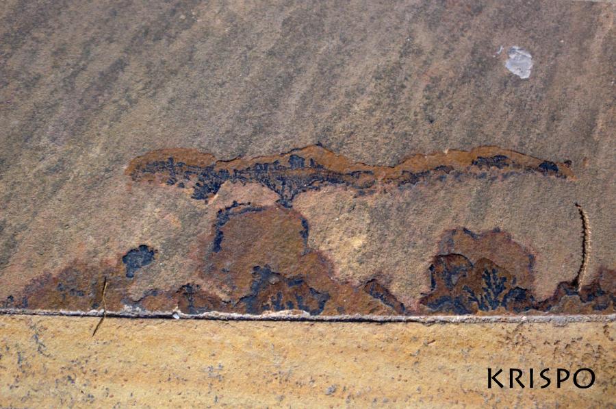 restos fosiles en baldosa de piedra