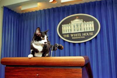 Cat Standing on the Press Podium at the White House clip art
