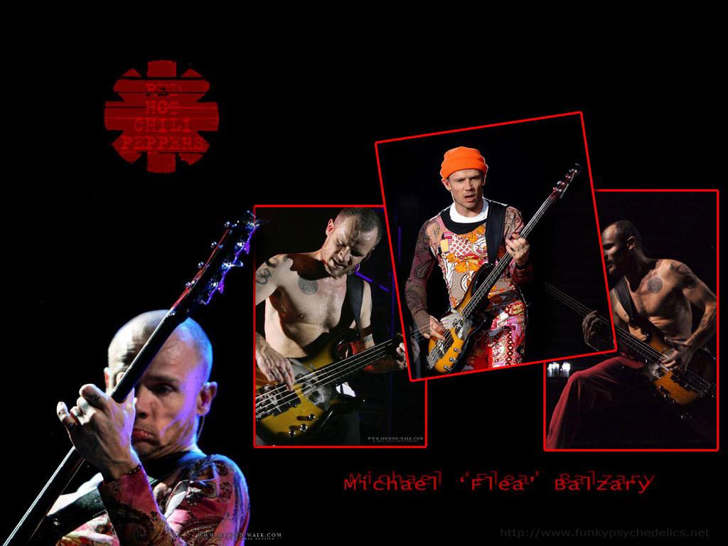 http://4.bp.blogspot.com/-JFx2hnp15lQ/UDOOUed2orI/AAAAAAAACCg/8YsnOem9mXE/s1600/flea.jpg