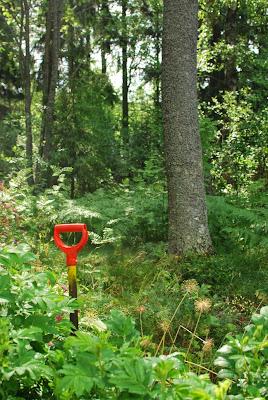 Muonamiehen mökki - Metsäpuutarha ennen