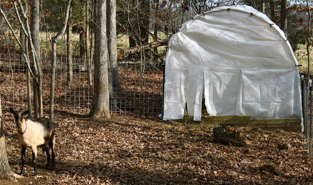 a tiny homestead  cattle panel structures and snow loads