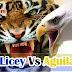 Águilas Cibaeñas y Tigres del Licey jugaran serie en New York