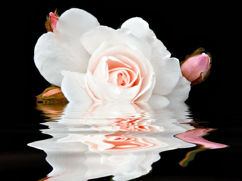 Nieve rosa para Emma