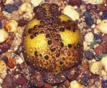 Kross-frosk