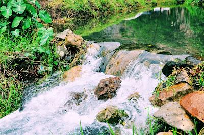 Riachuelo de agua viva, clara, diáfana y transparente.