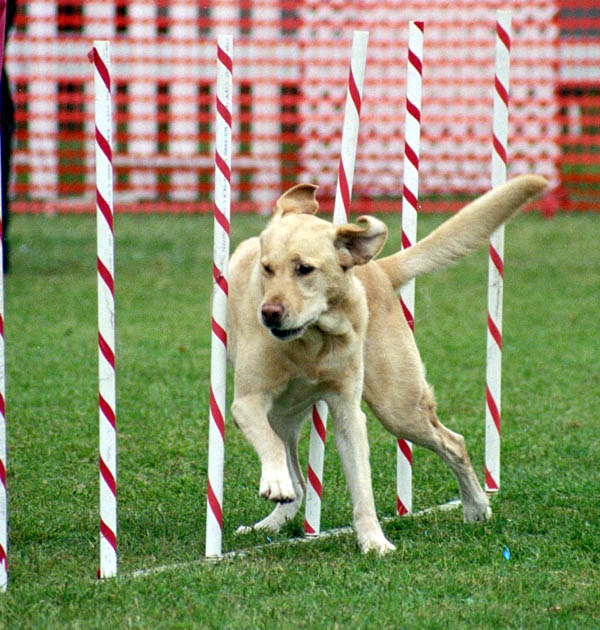 Dog Training Baton Rouge : Citronella No Bark Collar   Is It The Correct Selection