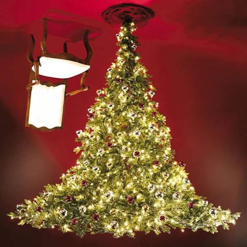 Acs Cool Christmas Trees