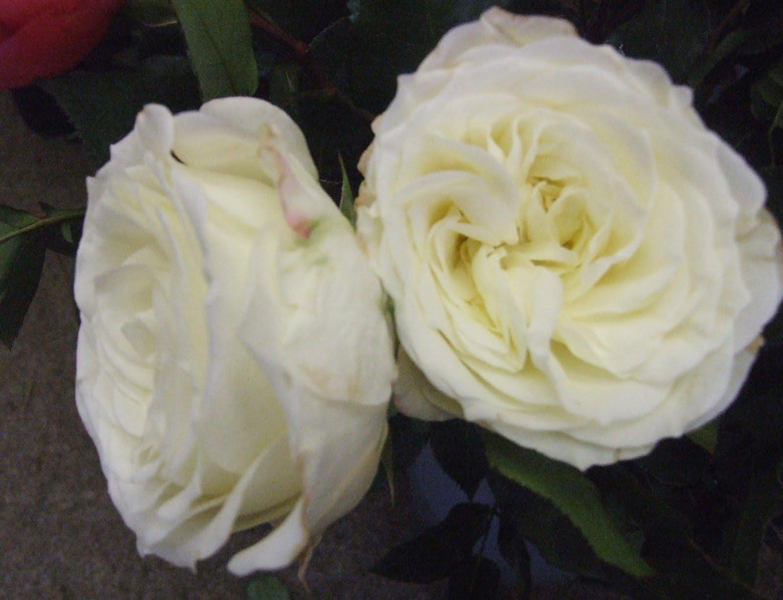 RJu0027s Florist