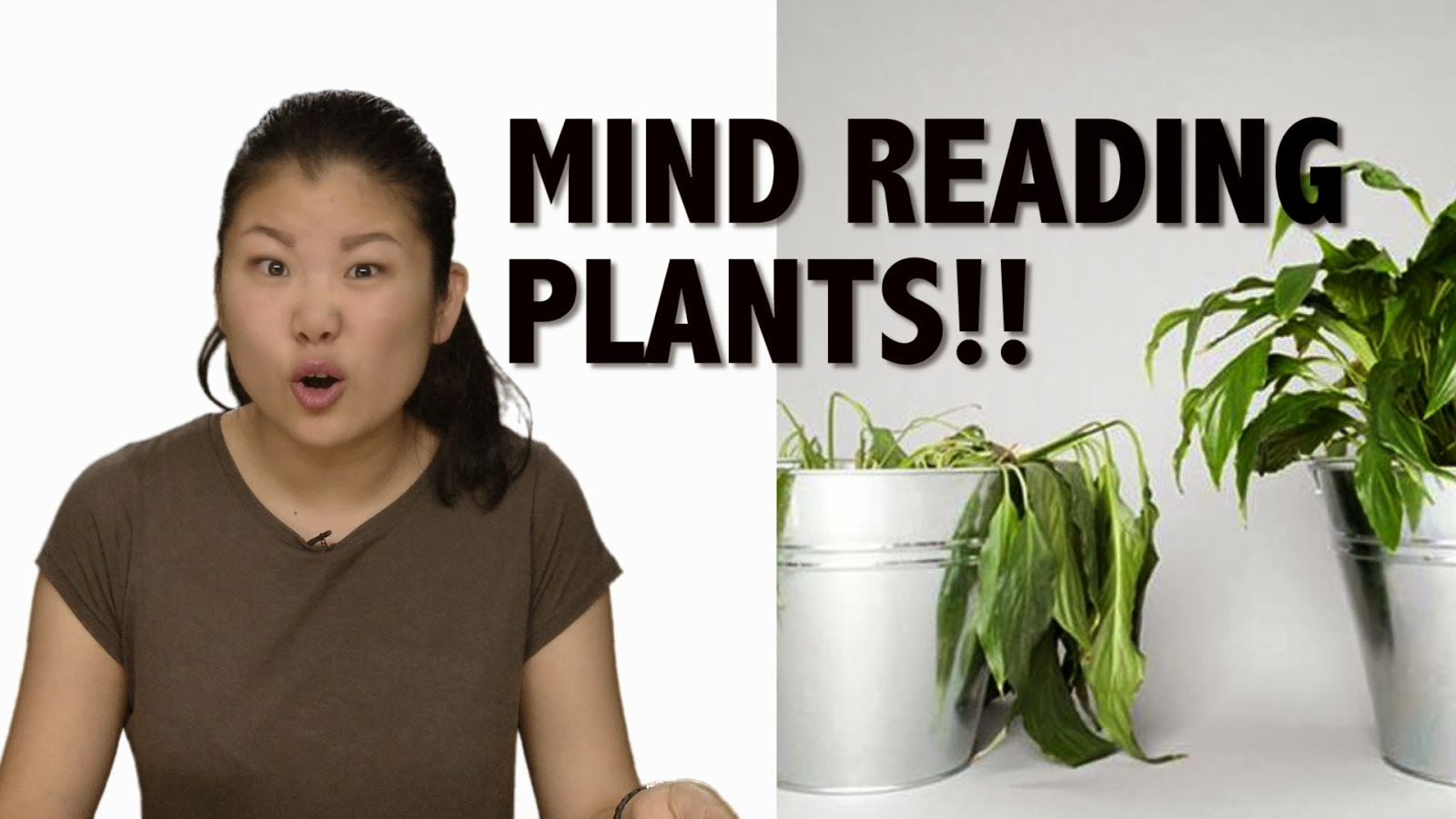 Your Houseplants Can Think, Talk, Read Your Mind: New Research Adds Evidence