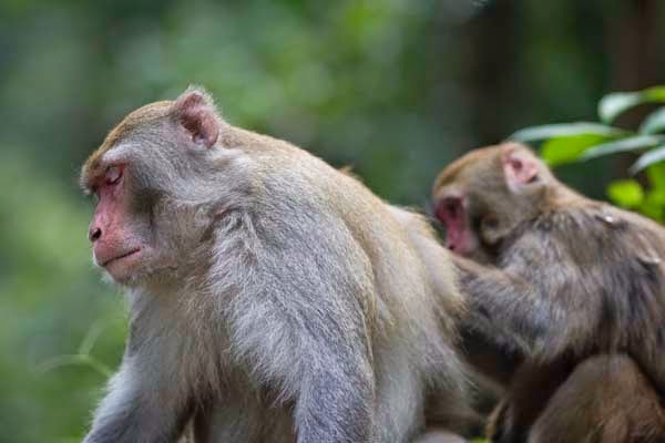 Here Are 24 Awesome Things You Didn't Know About Animals. #11 Just Made My Week. - Monkeys want equal pay. When given a different reward for the same completed task, the shafted monkeys will get upset