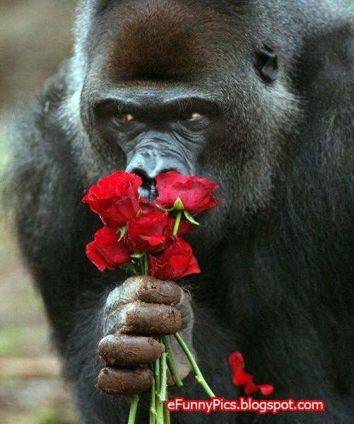 Romantic Gorilla