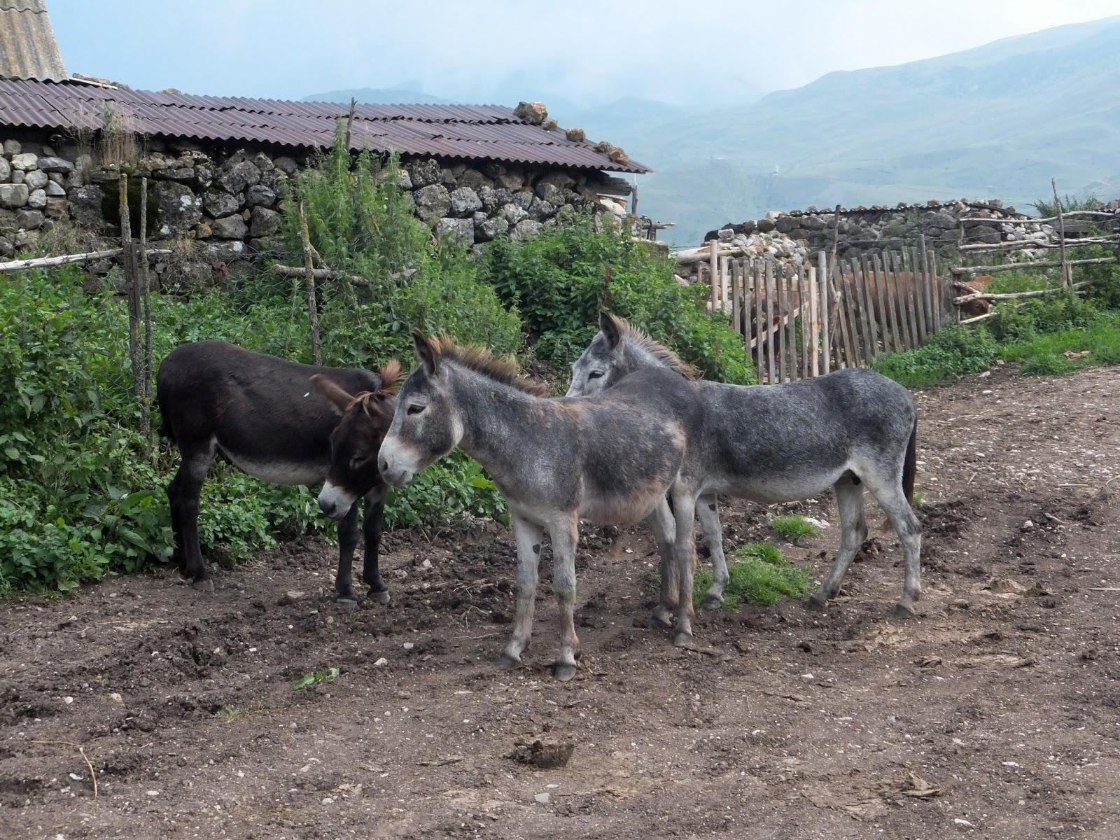 бродячие ослики в деревне