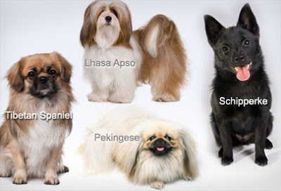 the-best-small-dog-breeds-for-children