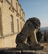 lion protecteur de la famille