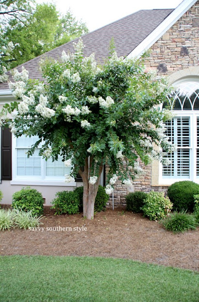 savvy southern style front yard