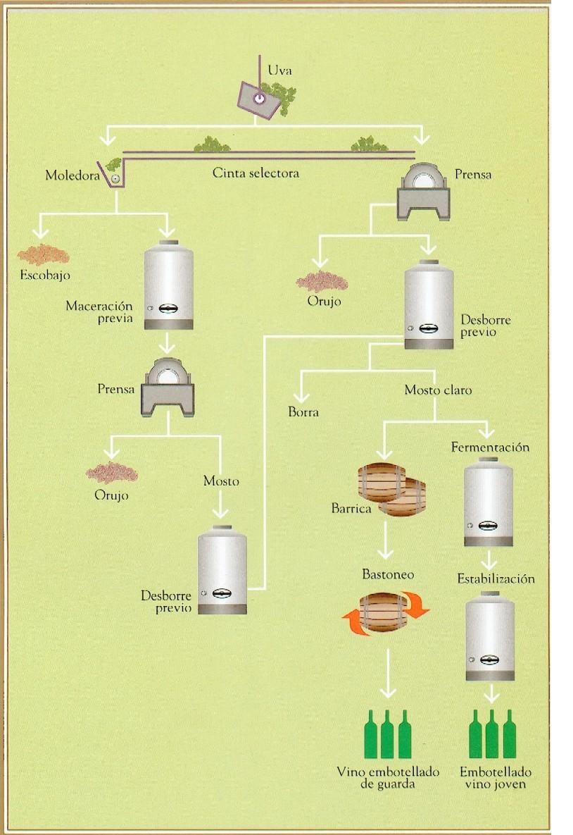 Circuito Productivo Del Vino : Geografia urbana rural circuito de fabricación del vino