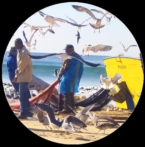 Pescadores, muchas gaviotas alrededor, barca color amarillo