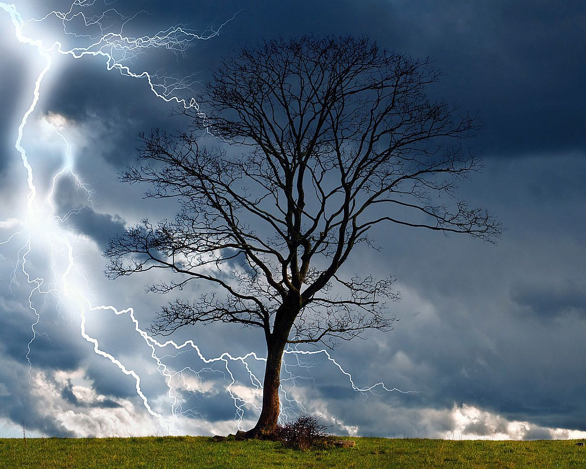 thunderstorm dry tree lightning nature peace mind