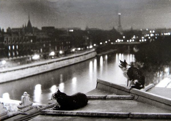 chats paris toits
