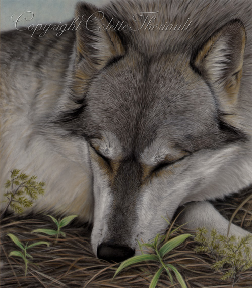 Timber Wolf Painting by Wildlife Artist Colette Theriault