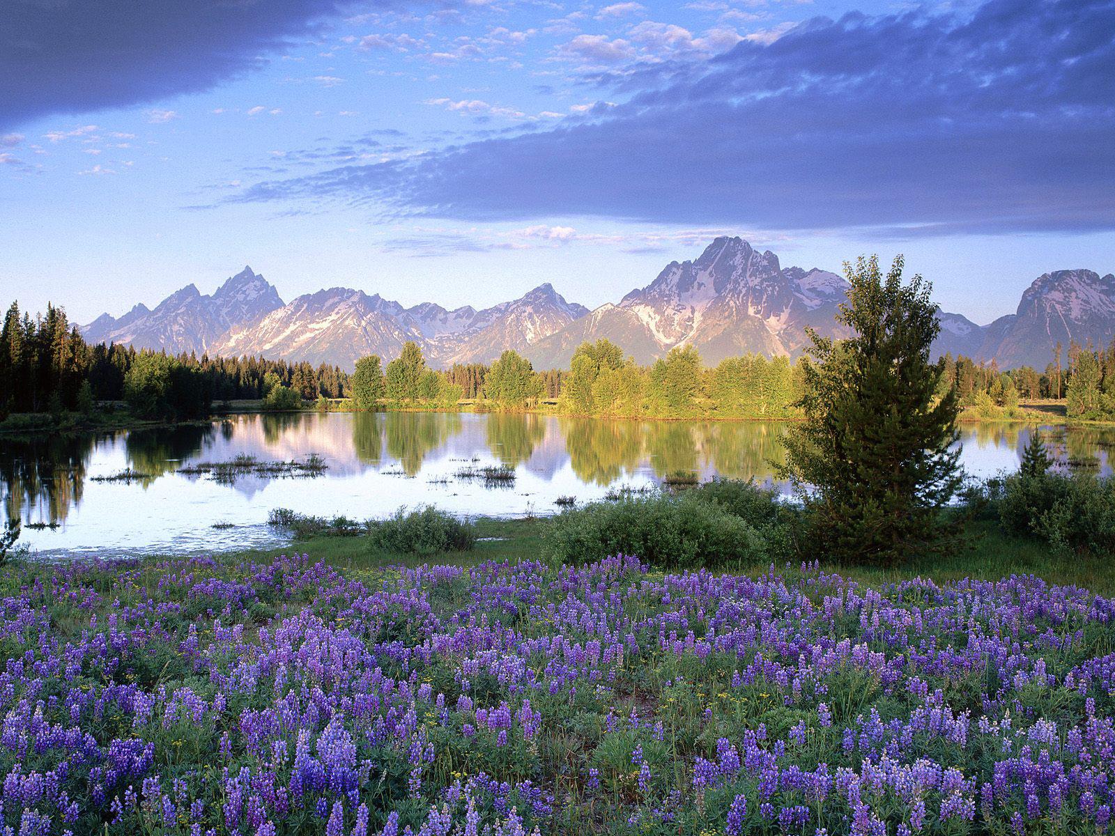 gambar alam pemandangan alam .