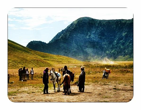 Paket Wisata Bromo 3 - Jasa kuda di Savana
