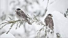 Sfondo invernale 3