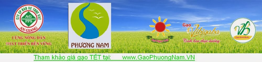 Gạo hạt ngọc trời sản xuất theo cánh đồng mẩu lớn, không dư thuốc bảo vệ thực vật.