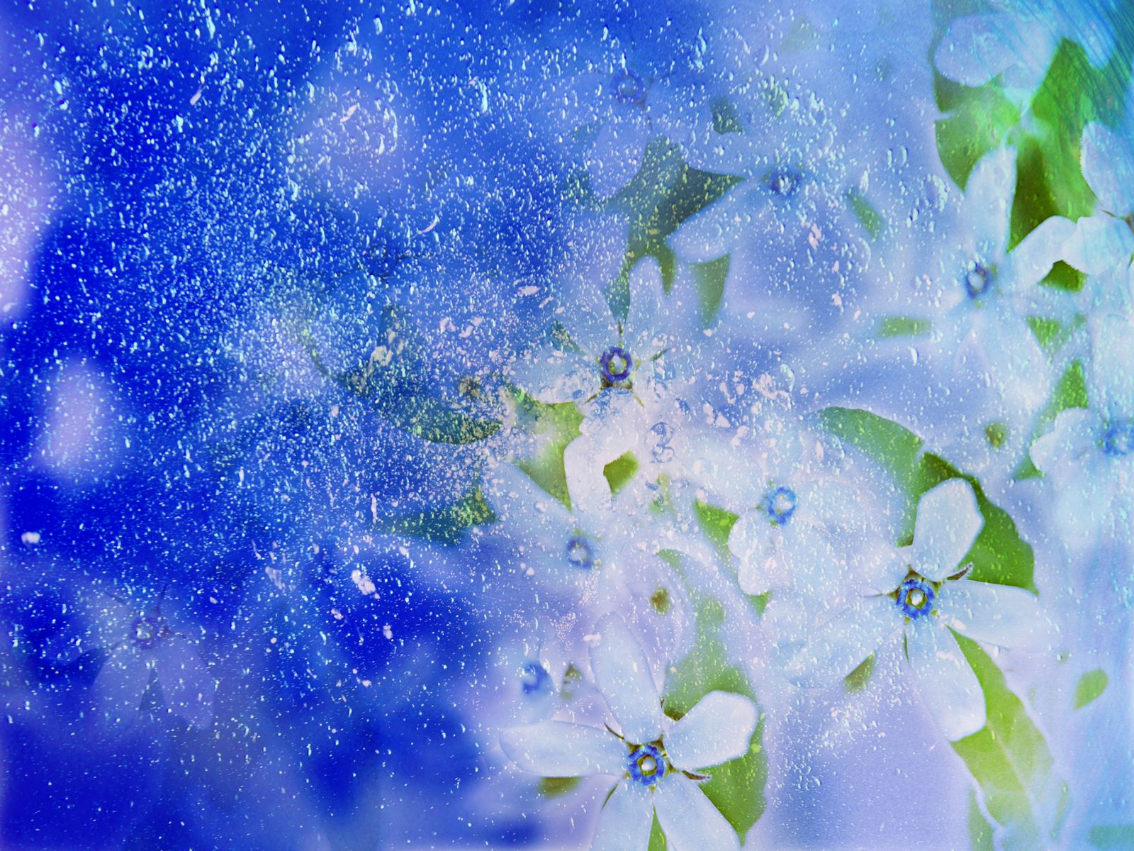 http://4.bp.blogspot.com/-JJZCt6wy6Bw/TaiunJQd9iI/AAAAAAAAGiA/6N1p-7WoISs/s1600/1290068800_1600x1200_beautiful-winter-flower.jpg