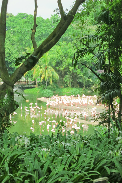 White Flamingos in Flamingo Lake