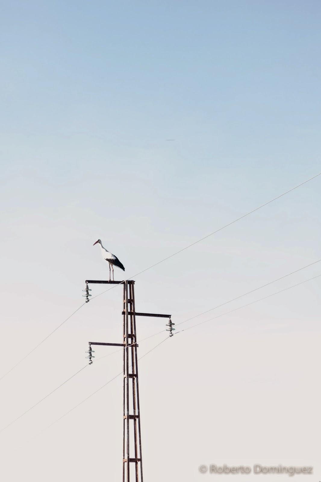 © R.Domínguez - Nuestro entorno cotidiano