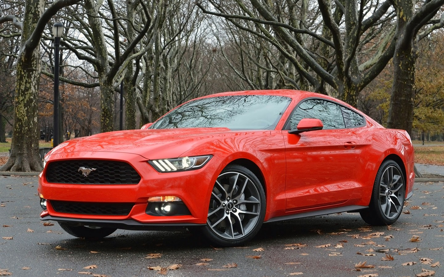 mustang militia 2015 ford mustang new colors. Black Bedroom Furniture Sets. Home Design Ideas