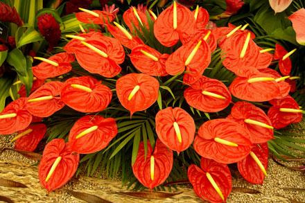 Arte y jardiner a plantas de interior un rinc n de la for Plantas de interior anturio