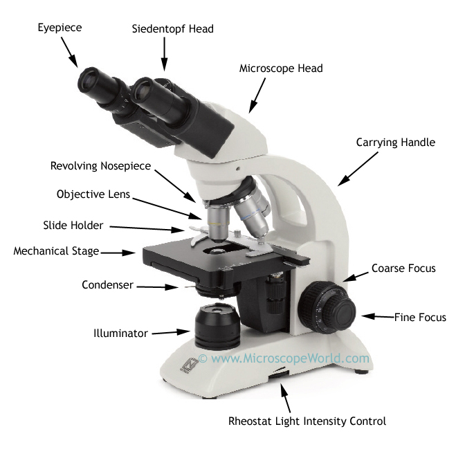 Microscope World Blog: Biological Microscope Parts