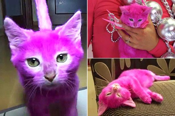 Bila Kucing Malang Dicat Pink Mati Akibat Terjilat Bulu