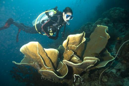 Diving raja ampat inspirator - Raja laut dive resort ...