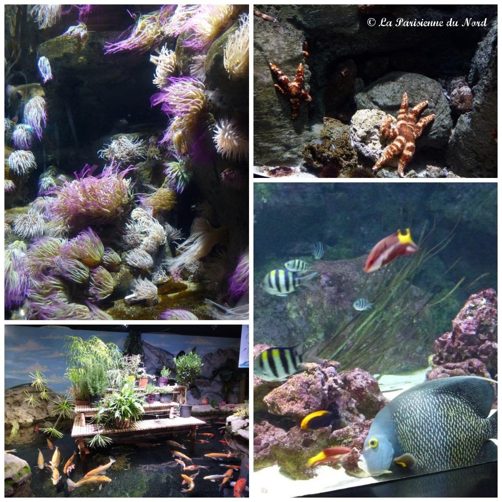 l aquarium de en nocturne la parisienne du nord