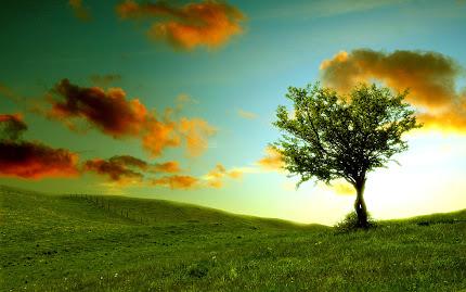 pohon tegak sendiri, pohon kesepian