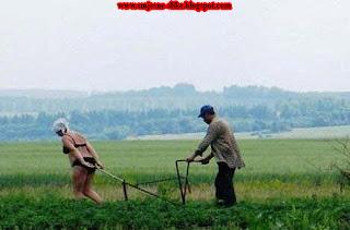 Seoski zivot, selo, seljak, poljuprivreda
