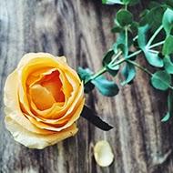 06 perfis inspiradores e fofos para seguir no instagram