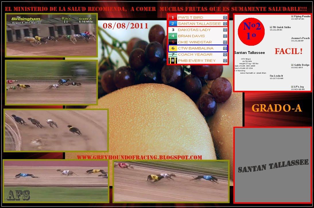 08/08/2011 - HACE UN PAR DE HORAS ESTA GALGUITA  DIO UN SHOW !