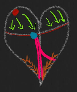 Normal Heart Conduction System