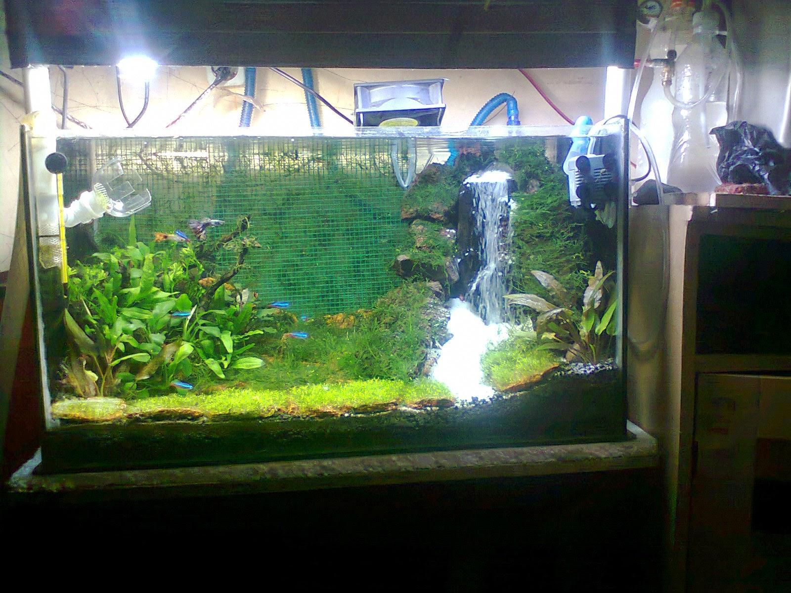 Ardy cianjur bogor cara membuat air terjun aquascape aquarium - Gambar aquascape ...