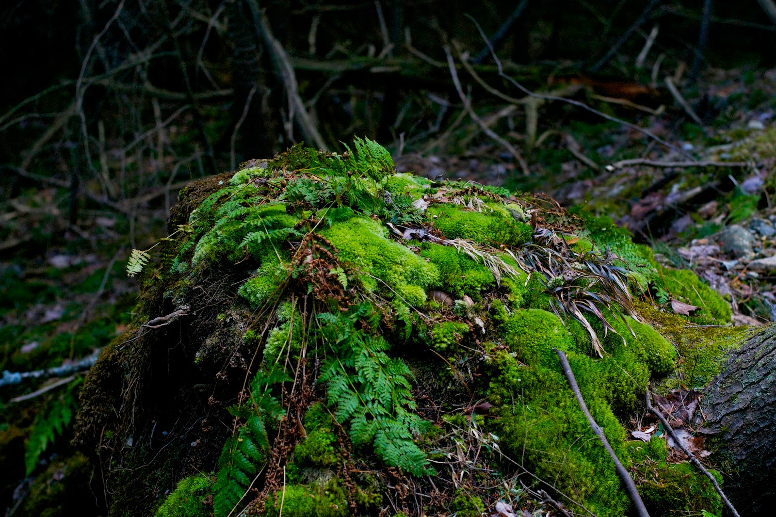 Ferny and mossy finds. Like a magical, faery world.