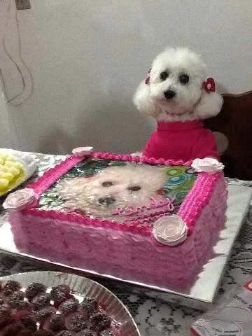 fiesta Español estilo perrito