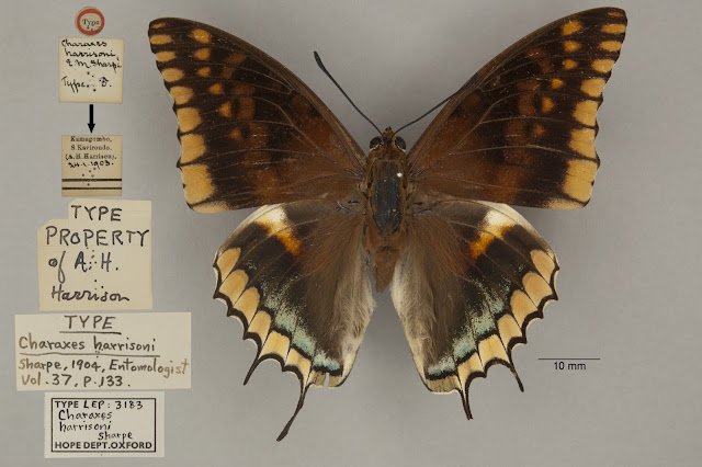 type, butterfly, Lepidoptera, OUMNH, HEC