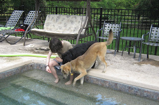Dogs learn to put their paws in the water.